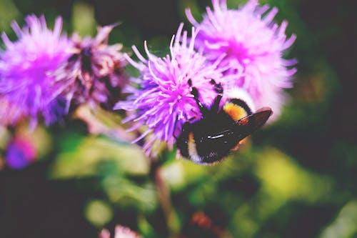 Free stock photo of animal, animal photography, beautiful, bee