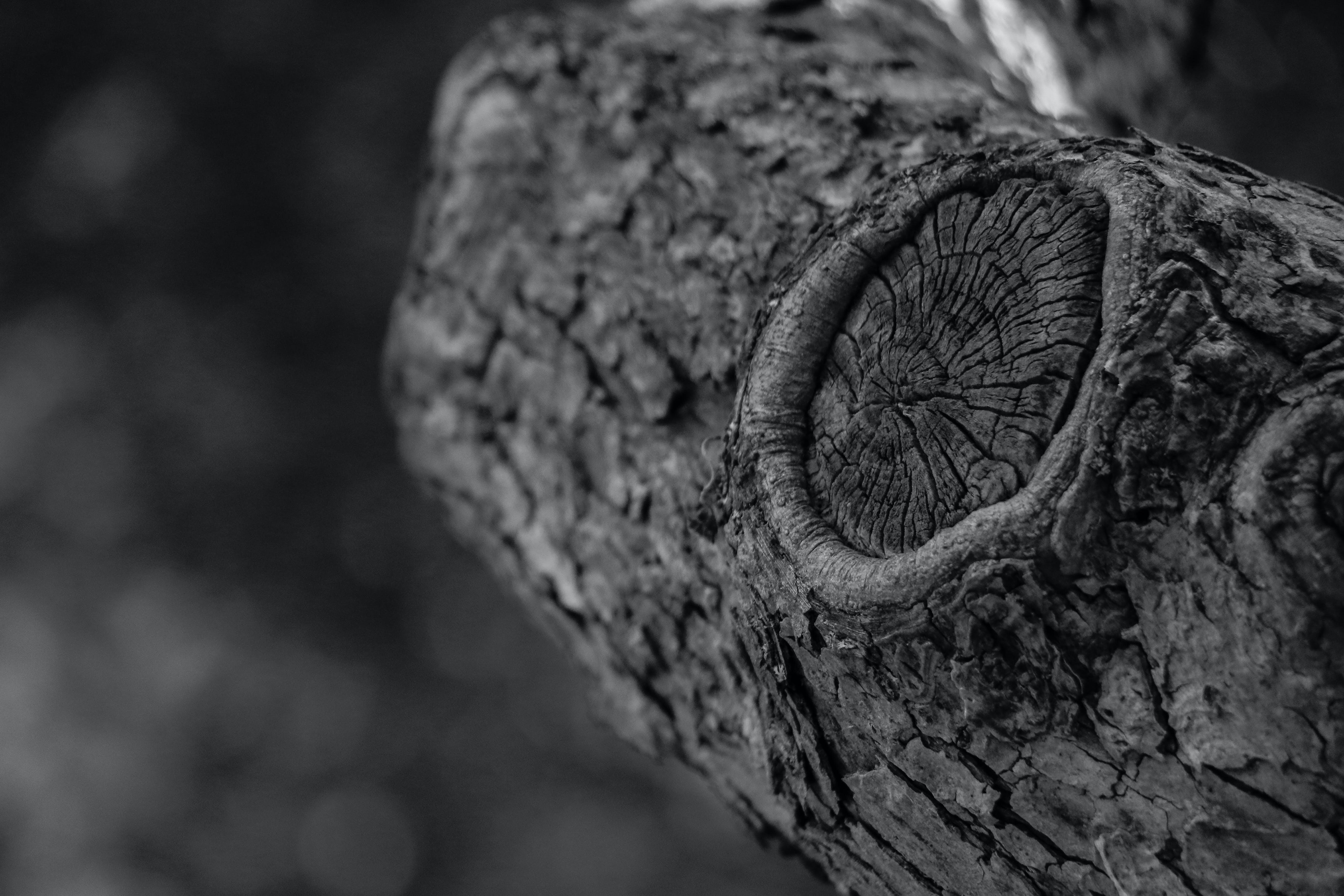 고대의, 골동품, 자연, 자연 사진의 무료 스톡 사진