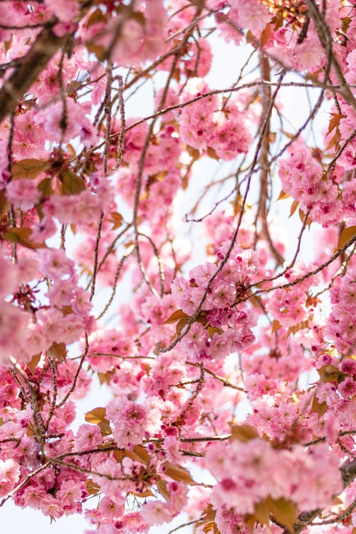 Imagine de stoc gratuită din afară, anotimp, arbore