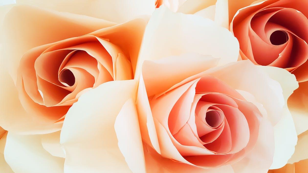 blomma, blomning, delikat