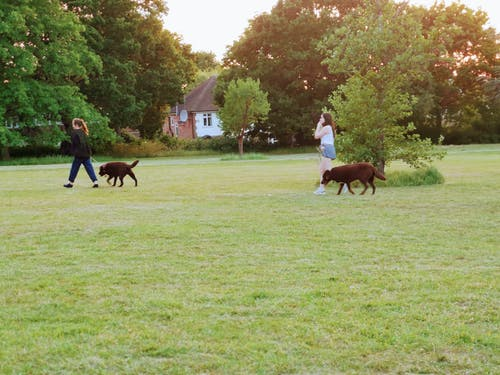 Free stock photo of dogs, ealing, england, gb