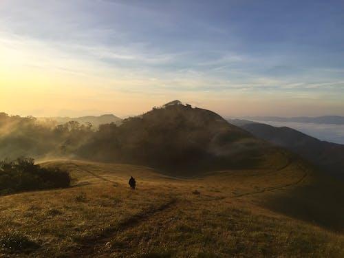 Ilmainen kuvapankkikuva tunnisteilla aamu, idyllinen, kenttä, luonto