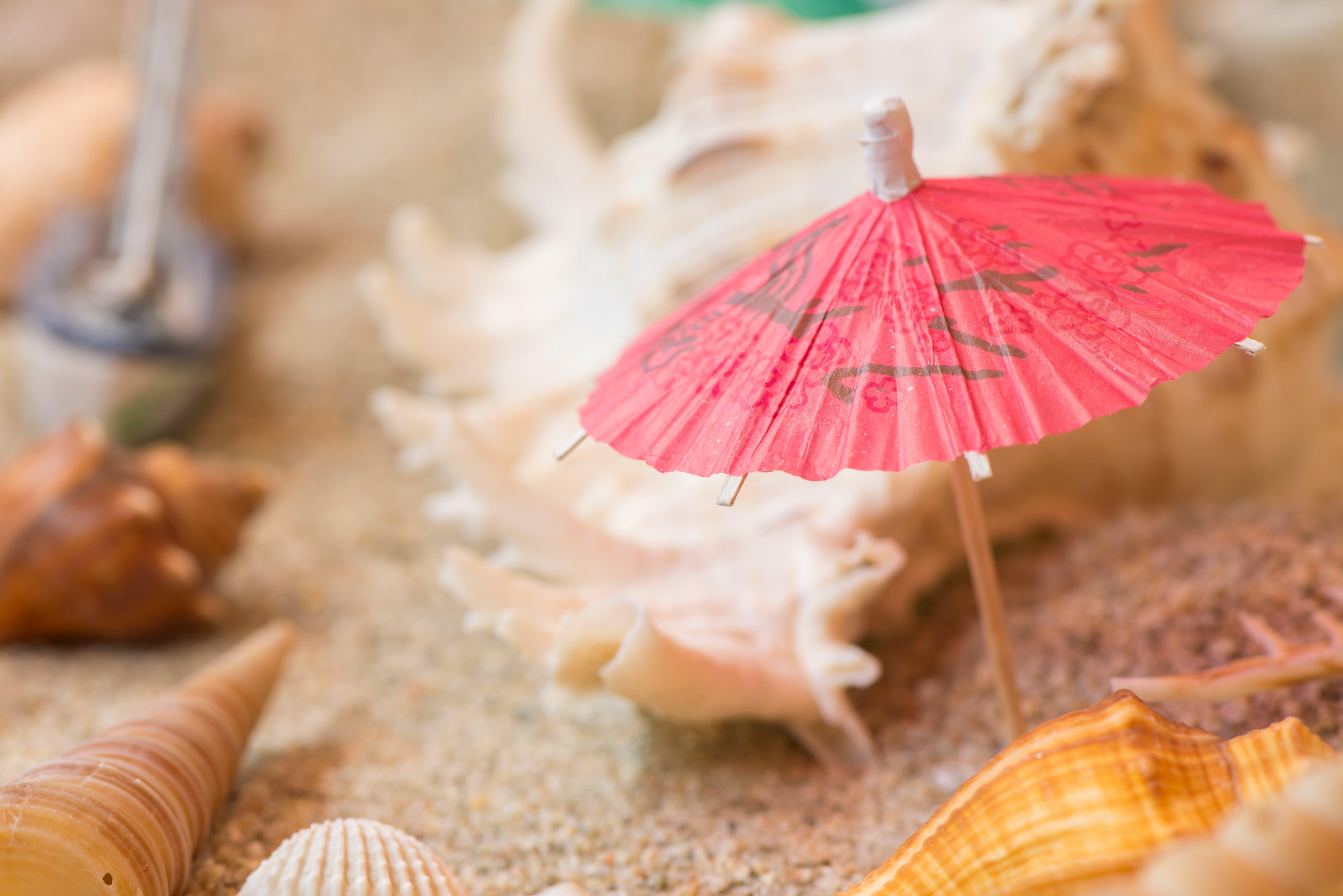 muschel, muscheln, regenschirm