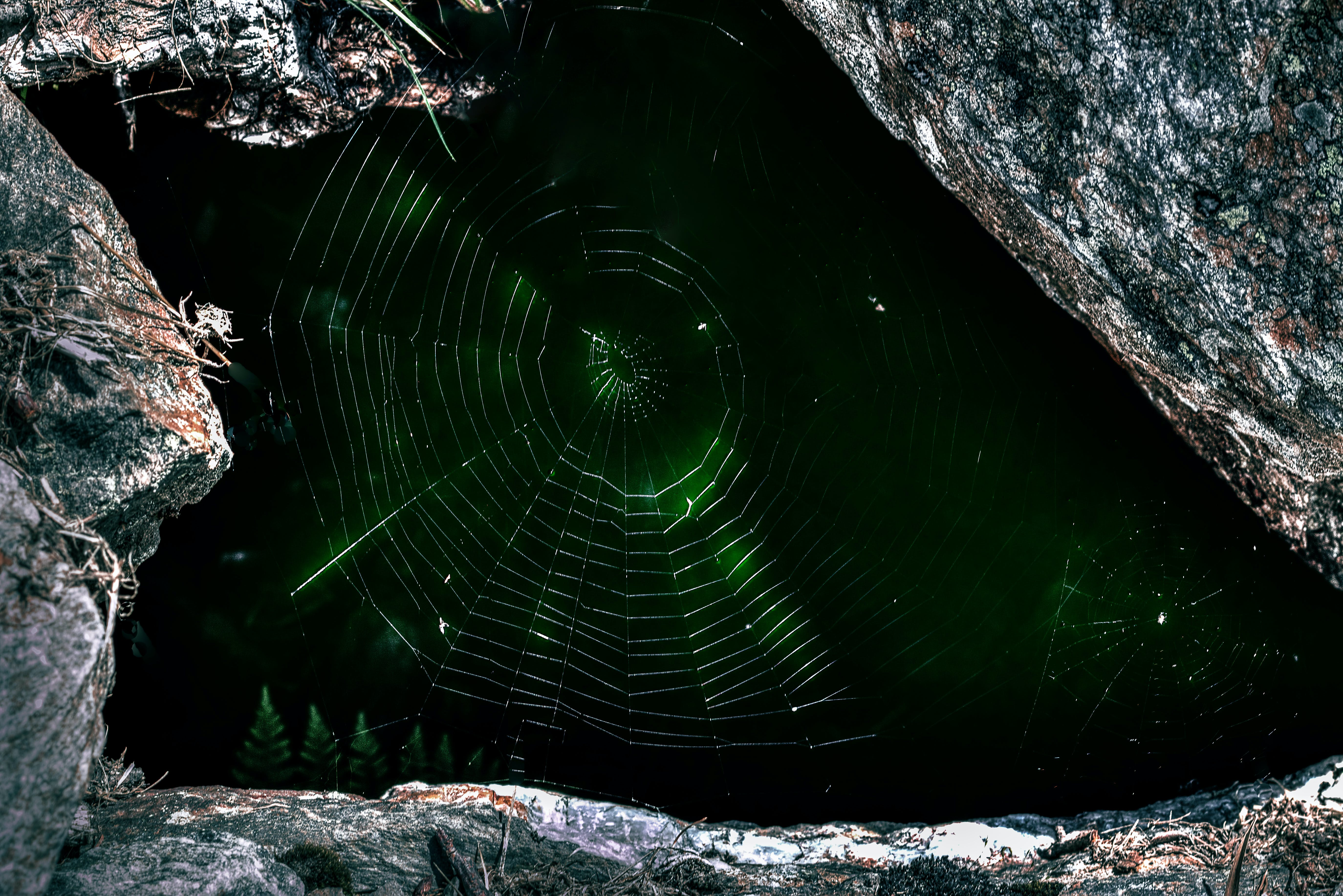 Macro Photograph of Spider's Web