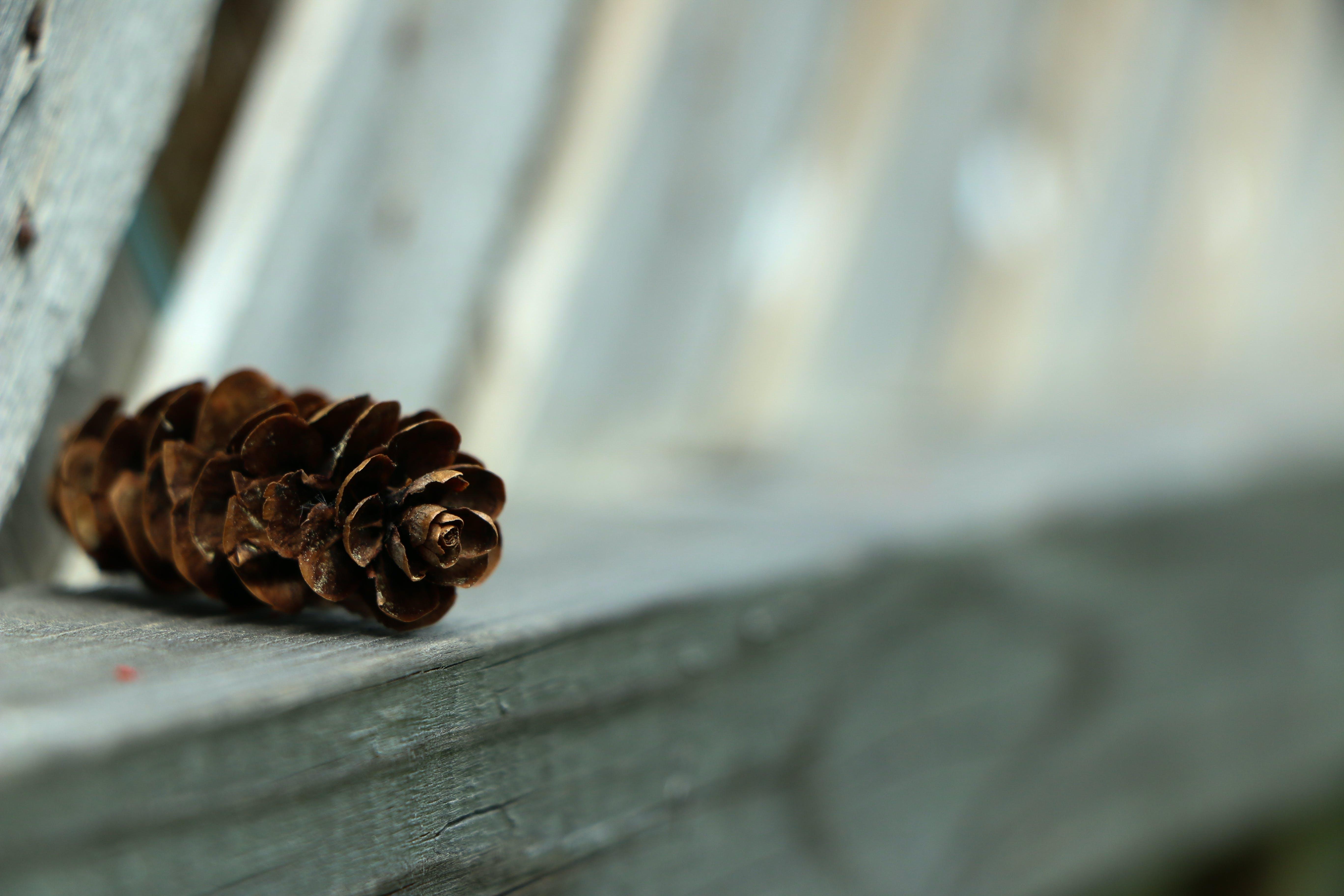 대자연, 솔방울, 자연의의 무료 스톡 사진