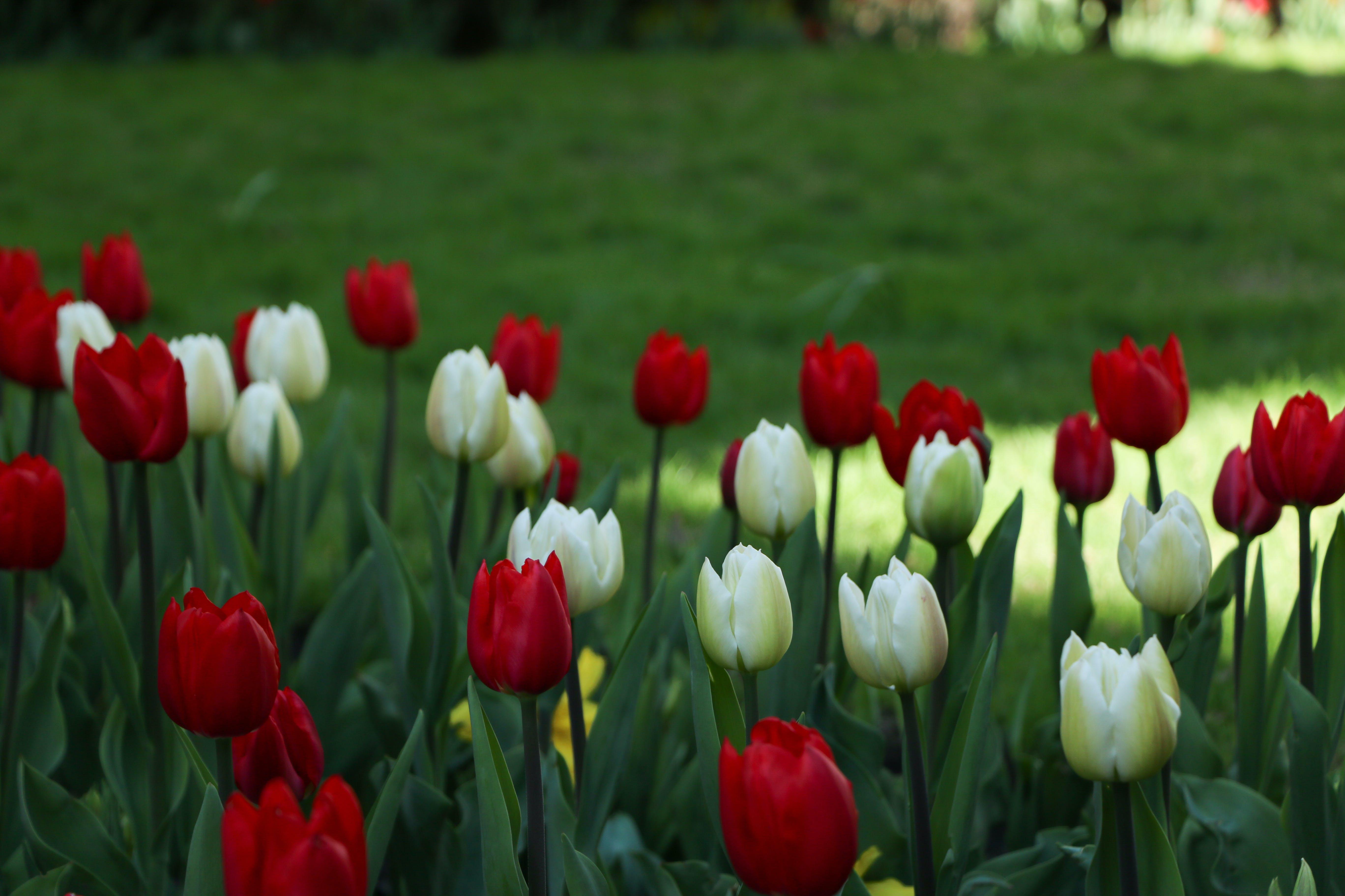 꽃 침대, 대자연, 아름다운 꽃, 자연의 무료 스톡 사진