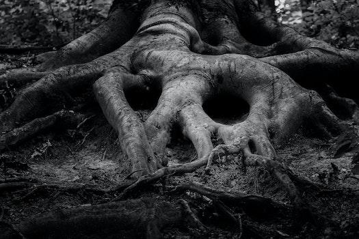 Free stock photo of tree, skull, black and white