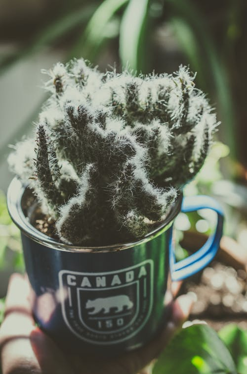 Unrecognizable person with cactus in teacup