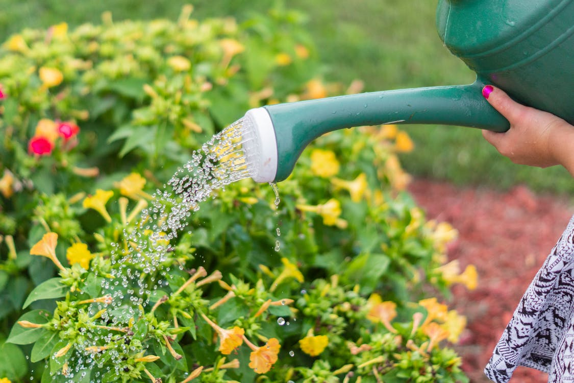 Photo of Person Watering the Plants