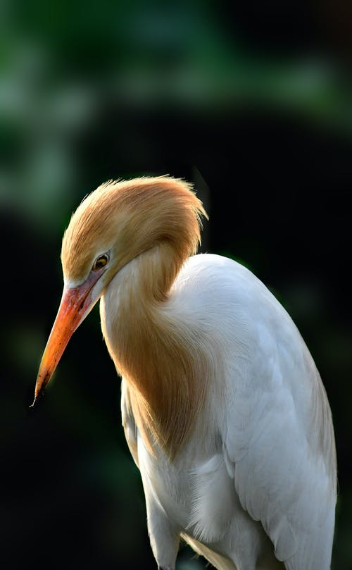 White Stork in Close Up Photography