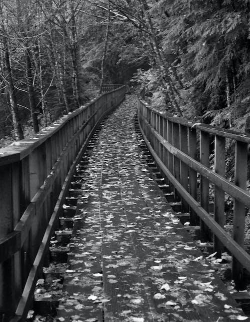 Darmowe zdjęcie z galerii z most w juneau