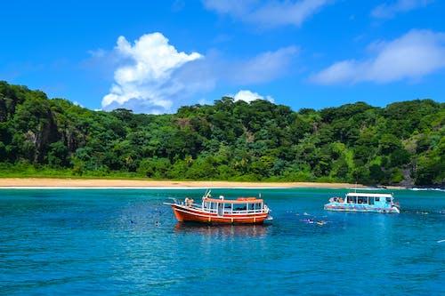 Foto d'estoc gratuïta de aigua, arbre, badia, barca