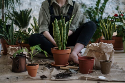 Photo of Person Sitting Near Potted Plants