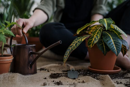 Person Holding Brown Ceramic Mug With Green Plant