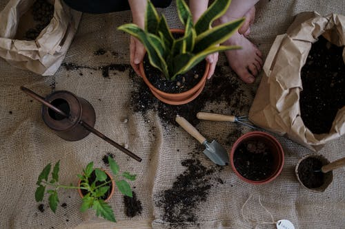 Gratis stockfoto met bloempot, bloempotten, bodem, fabriek