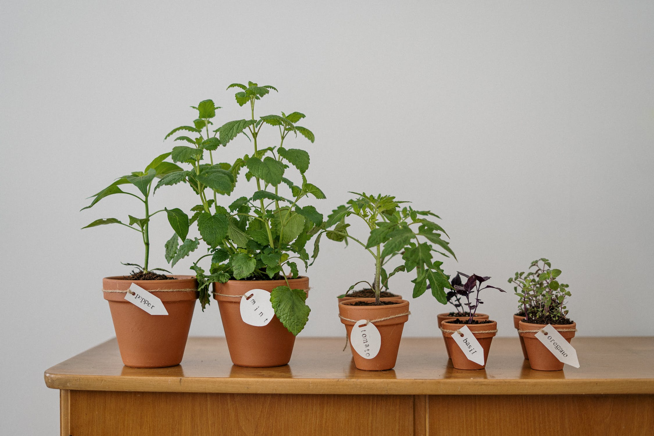raised bed garden planning - potted herb