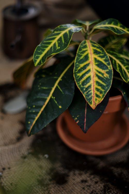 Безкоштовне стокове фото на тему «ботаніка, в горщиках, вегетувати»