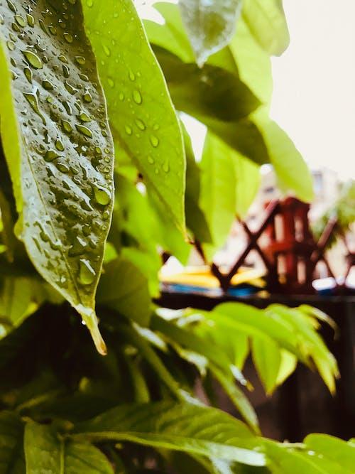 Δωρεάν στοκ φωτογραφιών με βροχεσ ..........