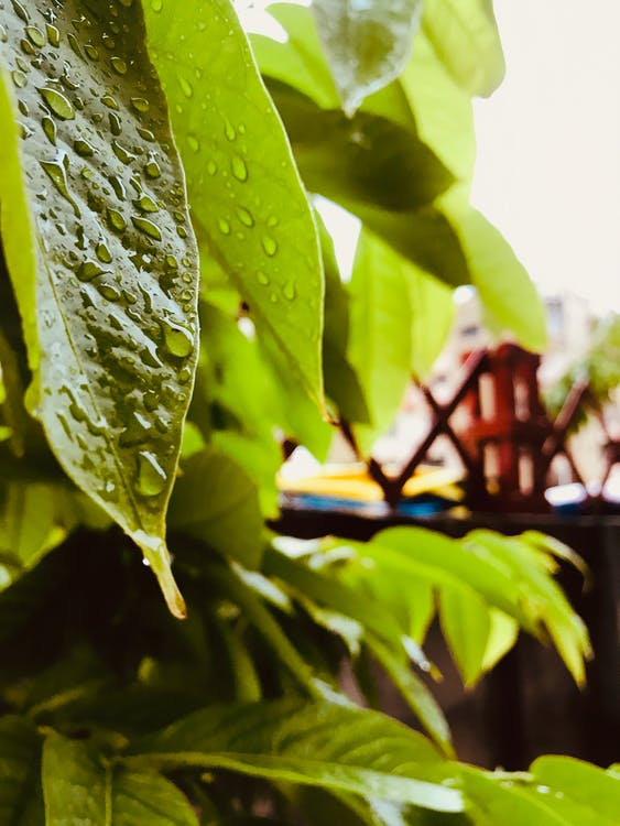 Kostenloses Stock Foto zu raindrops ..........