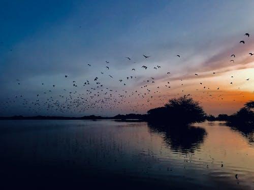Foto d'estoc gratuïta de ocells de paradis.
