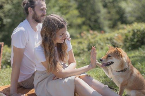 Immagine gratuita di animale domestico, cane domestico, compagno