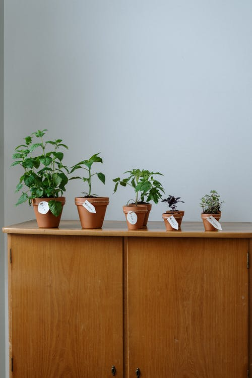 Green Potted Plants on Brown Wooden Cabinet