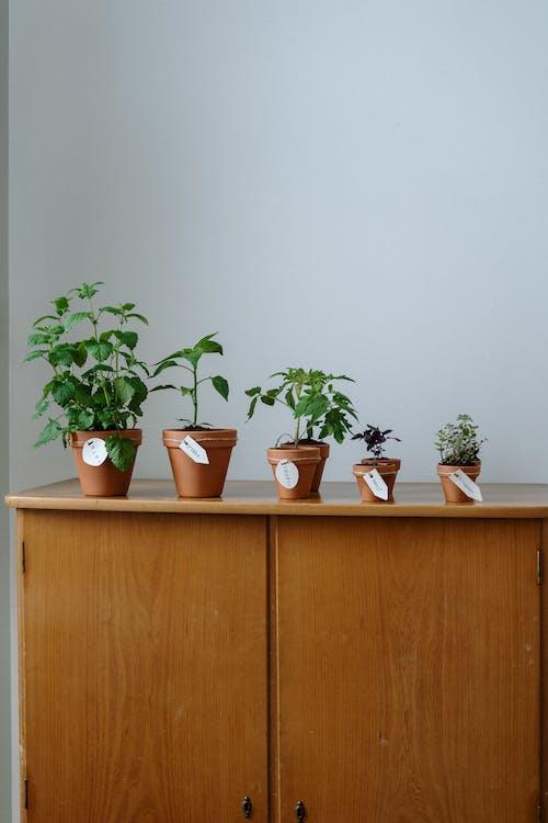 Foto profissional grátis de árvore, aumentar, aumento, balcão