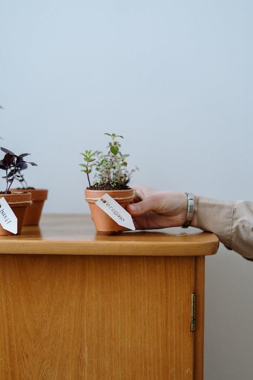 Foto profissional grátis de aumentando, aumentar, aumento, botânica