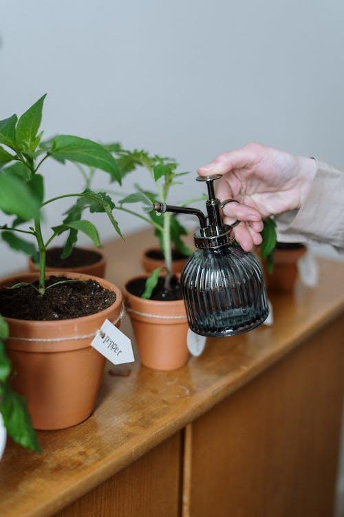 Бесплатное стоковое фото с выращивать, горшечных, горшки