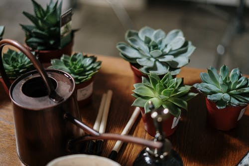 Green Succulent Plants on Brown Clay Pot