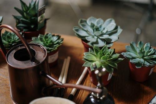 Бесплатное стоковое фото с выращивать, горизонтальный, горшечные растения