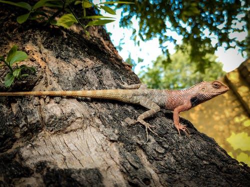 Photo of Iguana on Tree Trunk