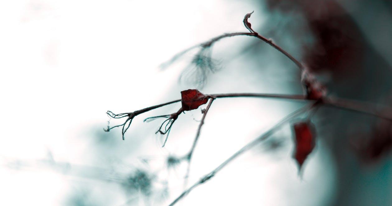 Fotobanka sbezplatnými fotkami na tému autumnvibes, biela, biela obloha