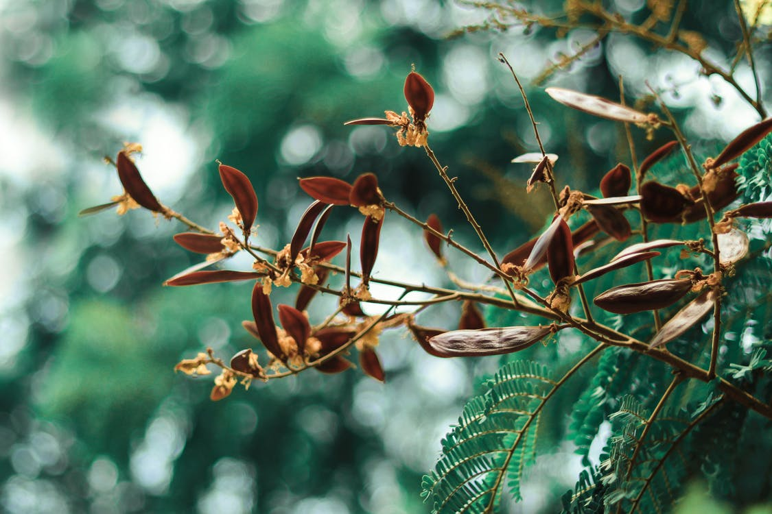 Gratis lagerfoto af autumnvibes, beskadiget, blå