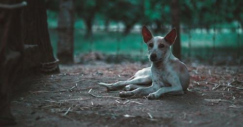 คลังภาพถ่ายฟรี ของ aminal, potrait, การทารุณสัตว์