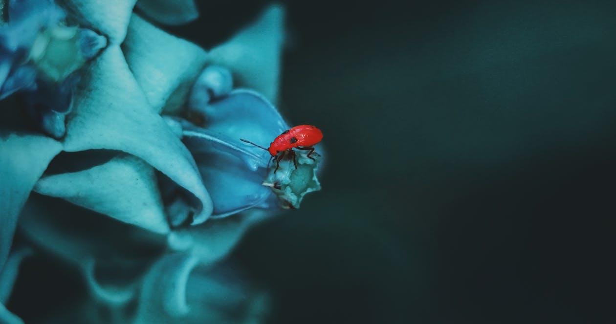 Fotos de stock gratuitas de animales, azul, Beetle