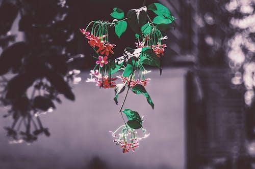 คลังภาพถ่ายฟรี ของ กลีบดอก, กลีบดอกไม้, การสังเคราะห์แสง