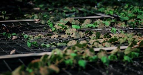 คลังภาพถ่ายฟรี ของ autumnvibes, falltime, leaveschanging