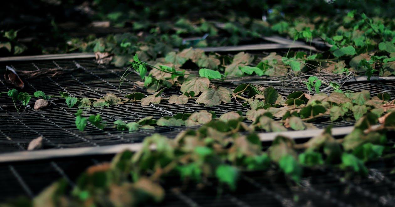 Free stock photo of autumn, autumn leaves, autumnvibes