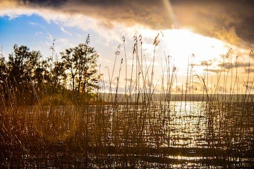 Free stock photo of chmury, jezioro, staw, trzciny