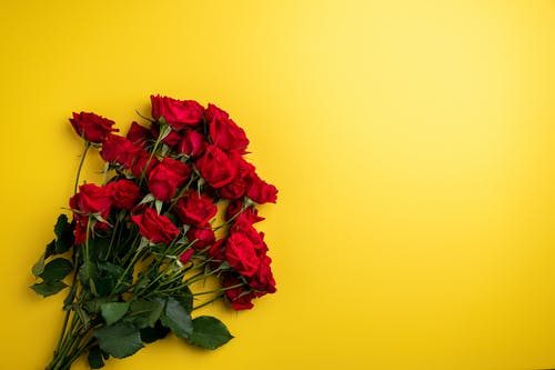 Red Roses on Yellow Surface