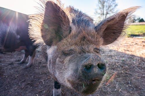 Kostnadsfri bild av däggdjur, djur, fara, gräs