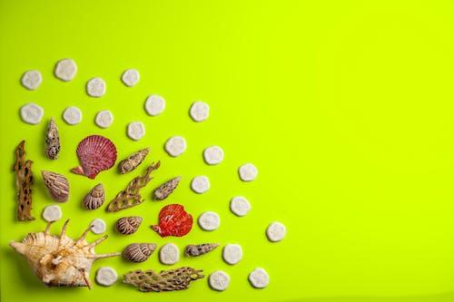 Kostnadsfri bild av blad, design, disjunkta, färg
