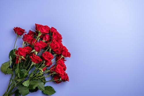 Kostnadsfri bild av blad, blomma, blomning, bröllop