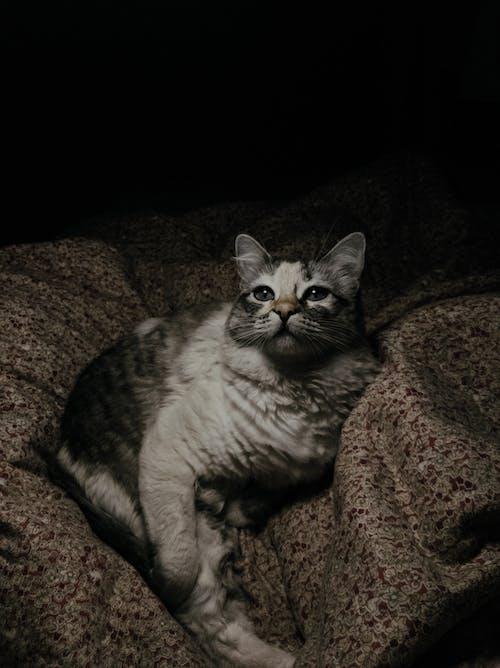 Free stock photo of animal, baby, cat, curiosity
