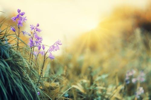 Photos gratuites de aube, brouiller, clairière, coucher de soleil