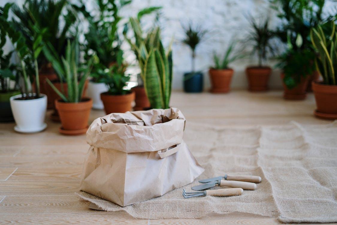 Immagine gratuita di cazzuola, coltivazione, crescere