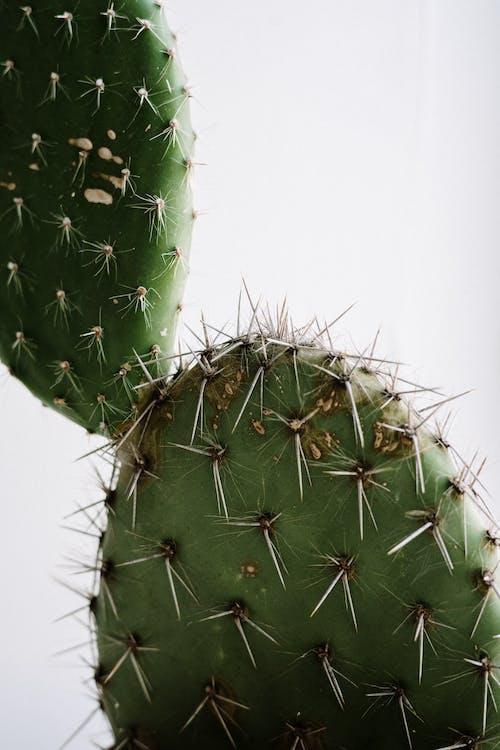 gardering, 仙人掌, 仙人掌植物, 增長 的 免费素材图片