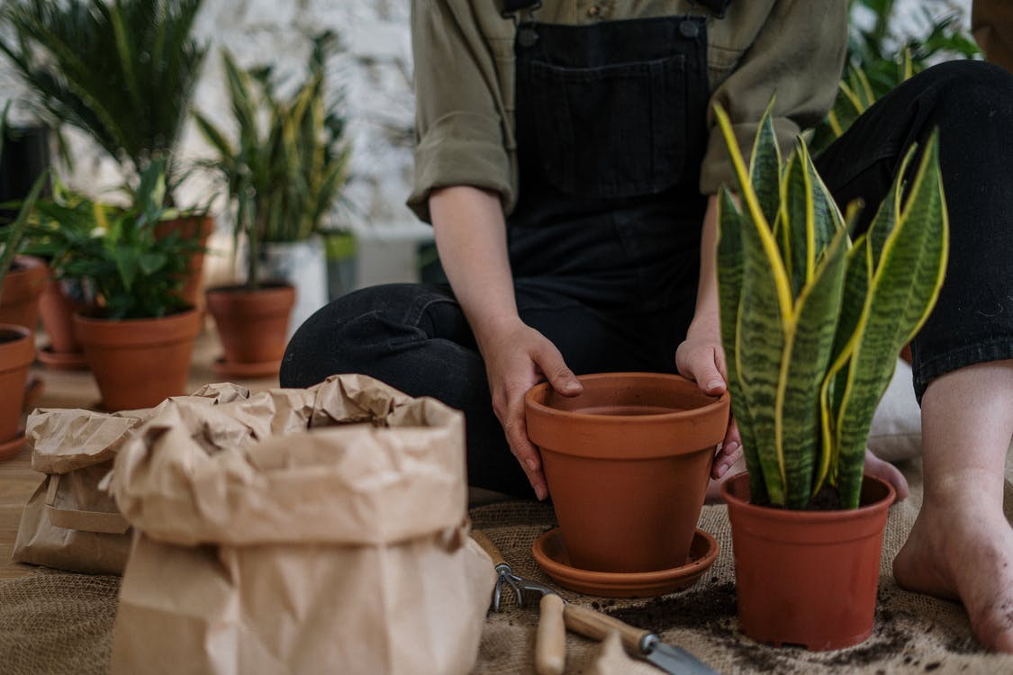 Person in Gray T-shirt and Blue Denim Jeans Sitting on Brown Clay Pot