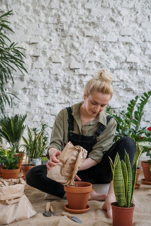 Бесплатное стоковое фото с блондинка, выращивать, горшечных